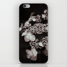 Black and White Botanical -- Antique Lacecap Hydrangea iPhone & iPod Skin