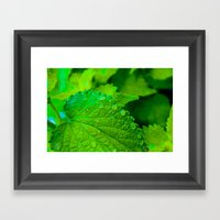 Vibrant Green Leaves Clo… Framed Art Print