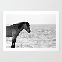 Assateague Pony Art Print
