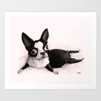 The Little Fat Boston Terrier Art Print