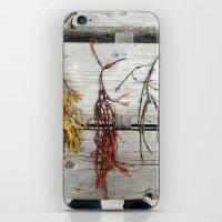 Deer Isle Seaweed  iPhone & iPod Skin