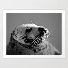 Howth Harbour Seal Art Print