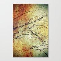 Vine Canvas Print