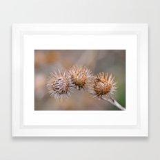 Thorn Pods Framed Art Print