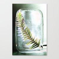 Frozen Fern Canvas Print
