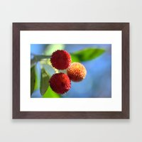 Strawberry tree fruits 8697b Framed Art Print