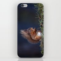 RED SQUIRREL EATING iPhone & iPod Skin