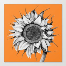Sunflower orange Canvas Print
