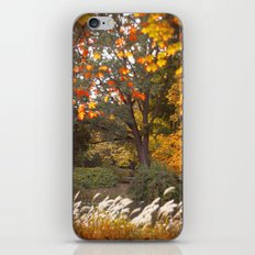 Autumn tree iPhone & iPod Skin