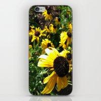 Black Eye Susans iPhone & iPod Skin