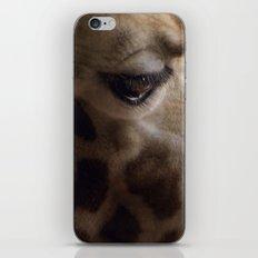 Portrait Of A Giraffe iPhone & iPod Skin