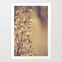 Sunday flowers Art Print