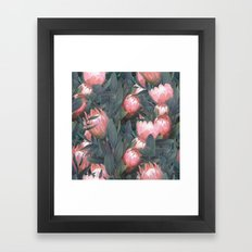 Proteas party Framed Art Print