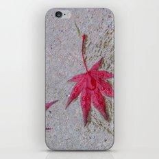 Wet Stars iPhone & iPod Skin