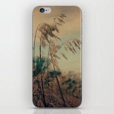 Winter Field iPhone & iPod Skin