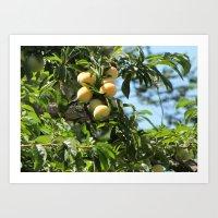 sweet fruits Art Print