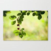 Cherries 5318 Canvas Print