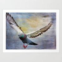 Pigeon On Wing Art Print