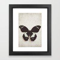 Papilio Aegus Butterfly Framed Art Print