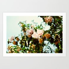 Light and Delicate Art Print