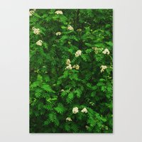 Greenery II Canvas Print