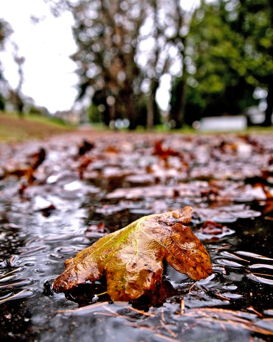 Wet Autumn leaf Art Print