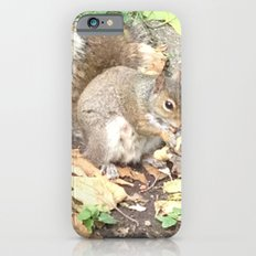 The Hungry Squirrel iPhone 6 Slim Case