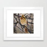 Northern Cardinal Female Framed Art Print
