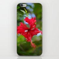 Scarlet Flower iPhone & iPod Skin