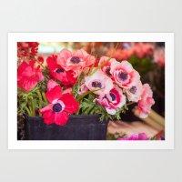 Anemones  and Bumblebee 5946 Art Print