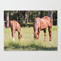 Horses Feeding In A Fiel… Canvas Print