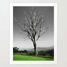 Blue Gum Tree Art Print