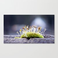 Maco Photography Moss Wa… Canvas Print