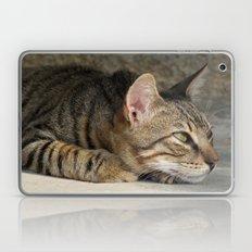 Thoughtful Tabby Cat Laptop & iPad Skin