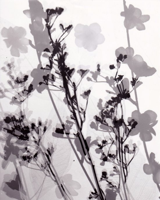 Flower Photogram #1 Art Print