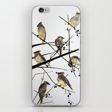 They groom each other iPhone & iPod Skin