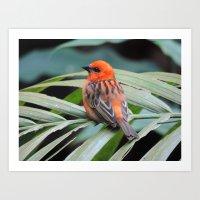 Bye Little Bird Art Print