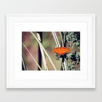 Orange Butterfly Framed Art Print