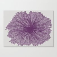 Jellyfish Flower A Canvas Print