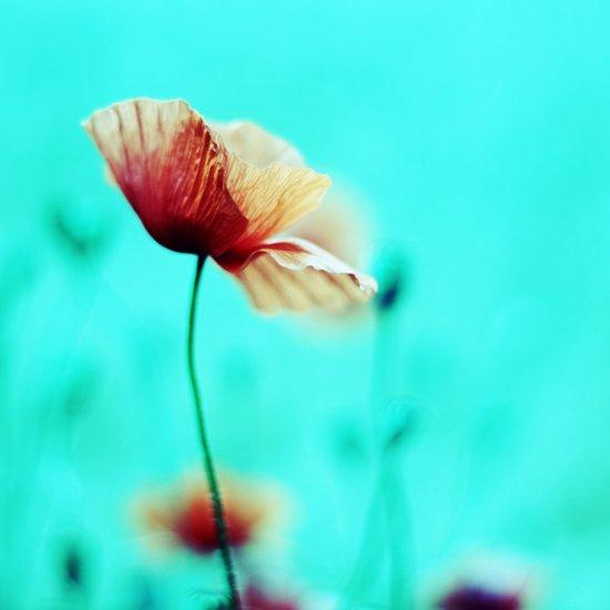 fantasy garden ~ flower dream°1 Art Print