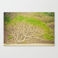 Canvas Print featuring Tree of life by Jaime Lynn Photography
