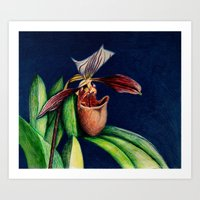 Magnificent Orchid  Art Print
