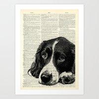 Vintage Springer Spaniel Art Print