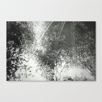 Canopy - Black & White Canvas Print