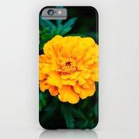 Tangerine Beauty iPhone 6 Slim Case
