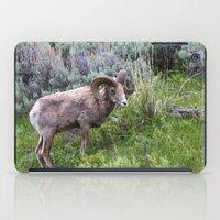 Big Horn Ram iPad Case