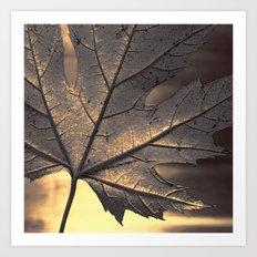 canadian maple leaf - square Art Print