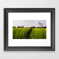 Corn 3 Framed Art Print