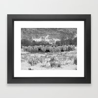 Sheep on the Brecon Beacons.Wales. Framed Art Print
