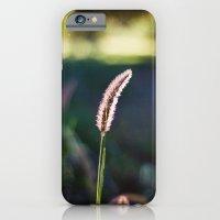 Autumn Grass II iPhone 6 Slim Case